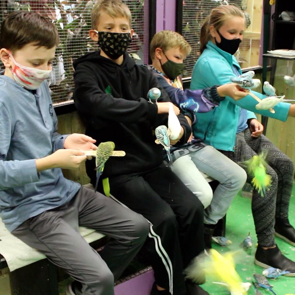 Parakeet Aviary Experience Kids